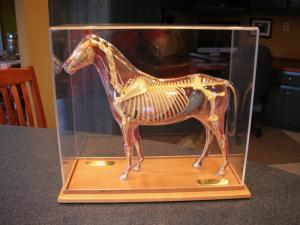 Horse Model Display Case